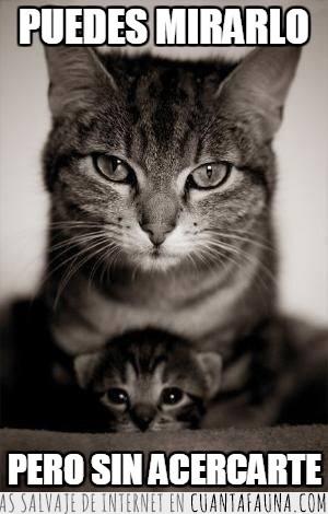 cachorro,madre,proteccion,proteger,sin acercarte