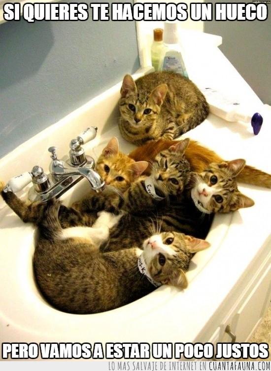 cinco,estrecho,gatos,lavabo,lavamanos,pica,poco espacio