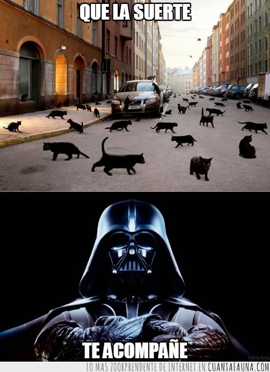 darth vader,gatos negros,mala suerte,supersticion