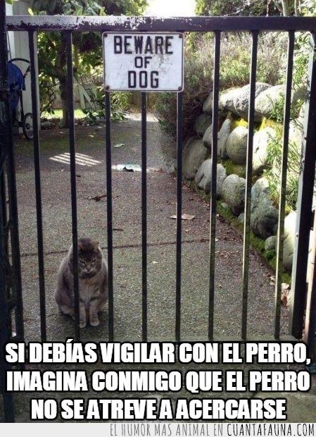 correr,perro,puerta,vigilar