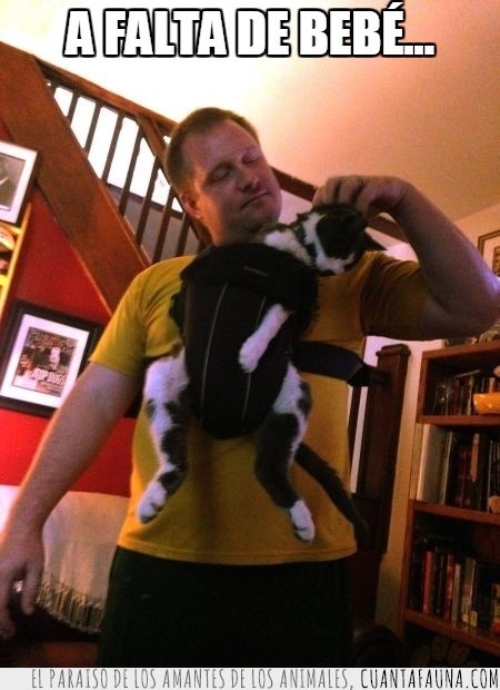 gato,llevar,metido,mochila,portabebes,ridiculo
