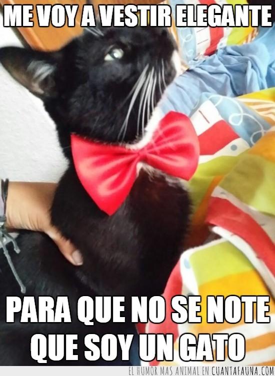 corbata,elegate,gato,notar,tie,vestir
