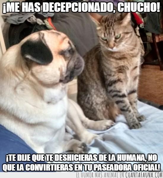 asesina,decepcionar,deshacerse,gata,humana,malvada,ordenes,perro