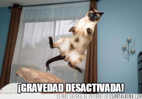 flotar,gato,gravedad,que cosiiiiiita,salto,siamés