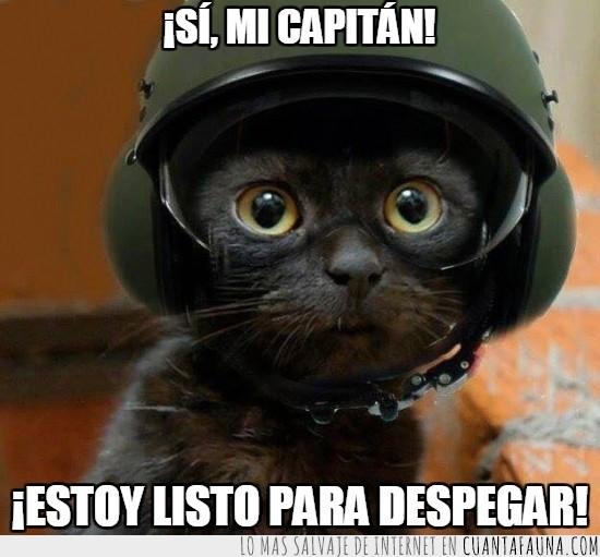 casco,despegar,gato piloto,preparado