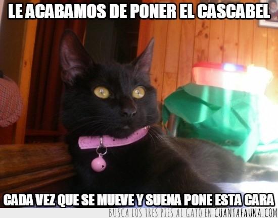 cascabel,collar,gato,impactada,rosa,sonido