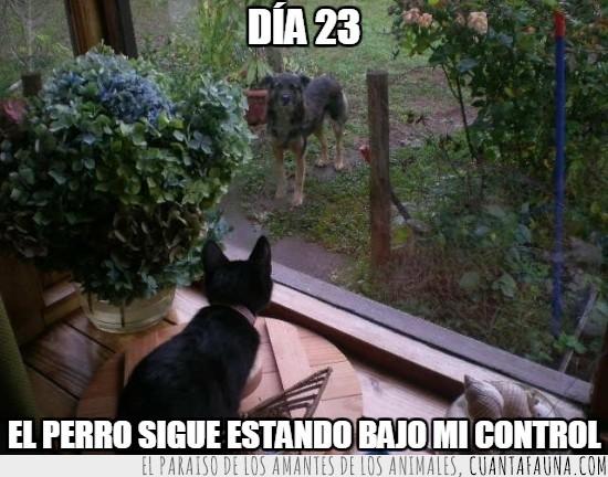 bajo control,control gatuno,controlado,gato,jardín,miradas,perro