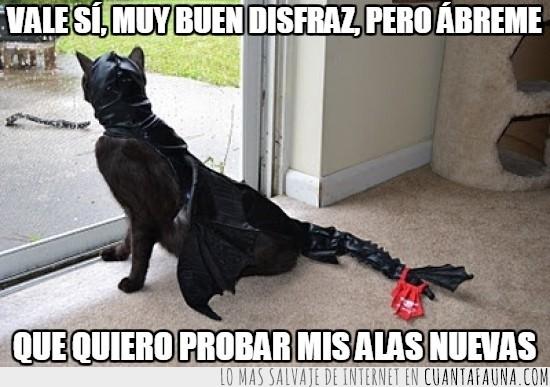 abrir,alas,como entrenar a tu dragón,Desdentao,dragón,gato,ventana