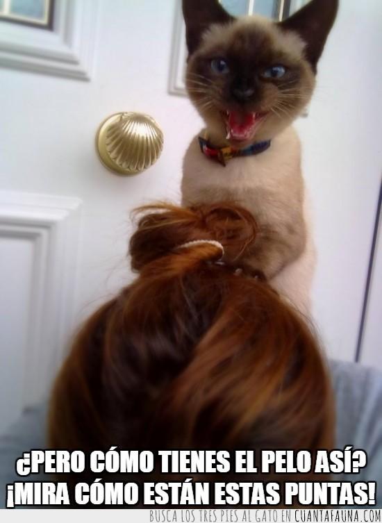 dentista,Gala,pelo,peluquera,puntas