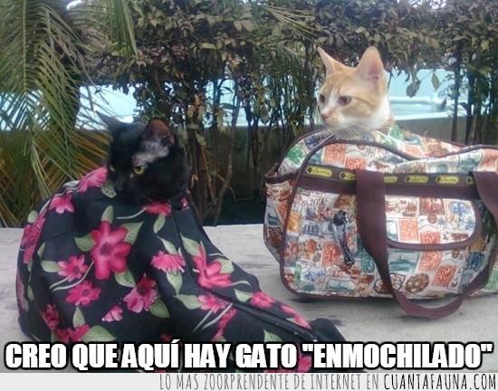 bolsos,gato,metidos,mochila
