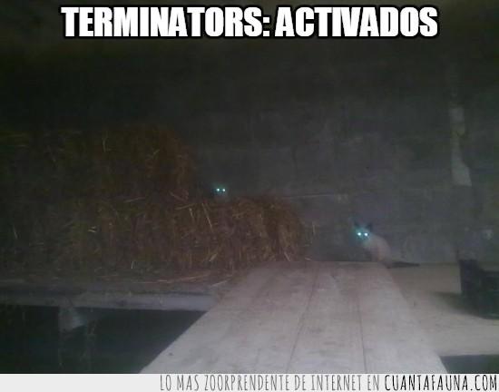 flash,Gala,gatos,ojos,Pepper,Terminator