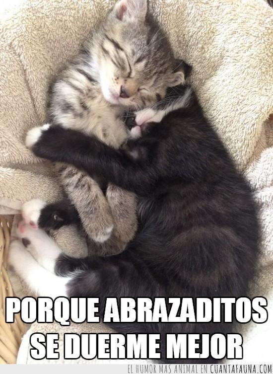 abrazados,abrazar,cachorros,dormir,hermanos,sueño