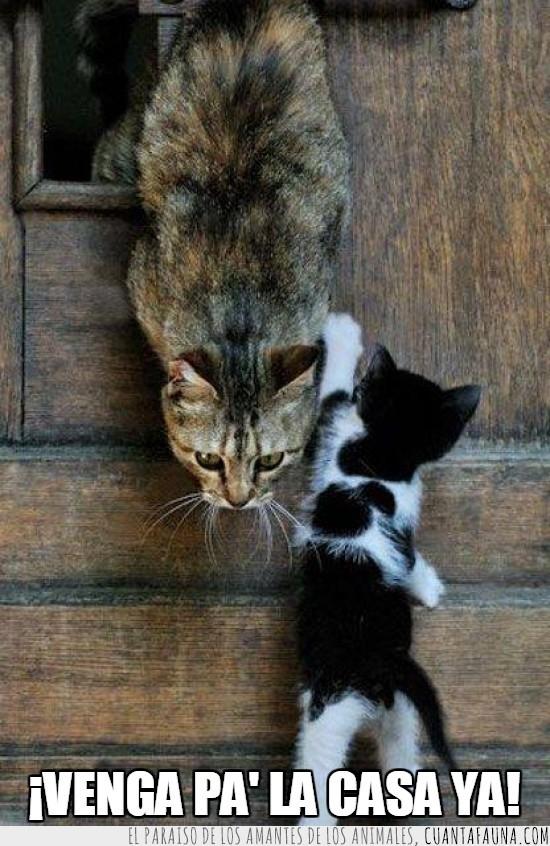 cachorro,hijo,llamar,madre,pa la casa,vigilar