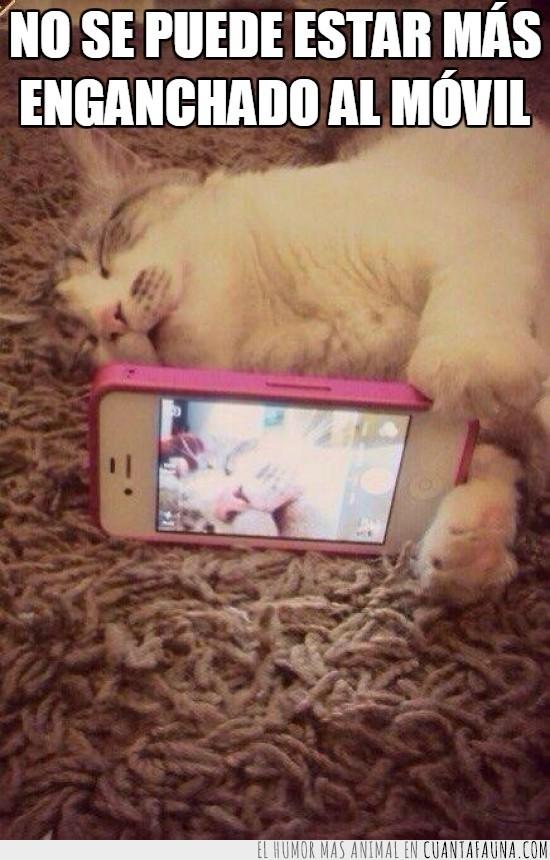 dormido,dormir,gato,iPhone,movil,selfie,smartphone
