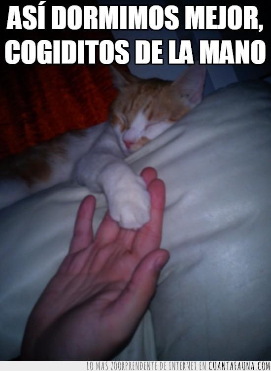 Dormir,Felicidad,Gato,Mano,Oliver,Pata,Patita