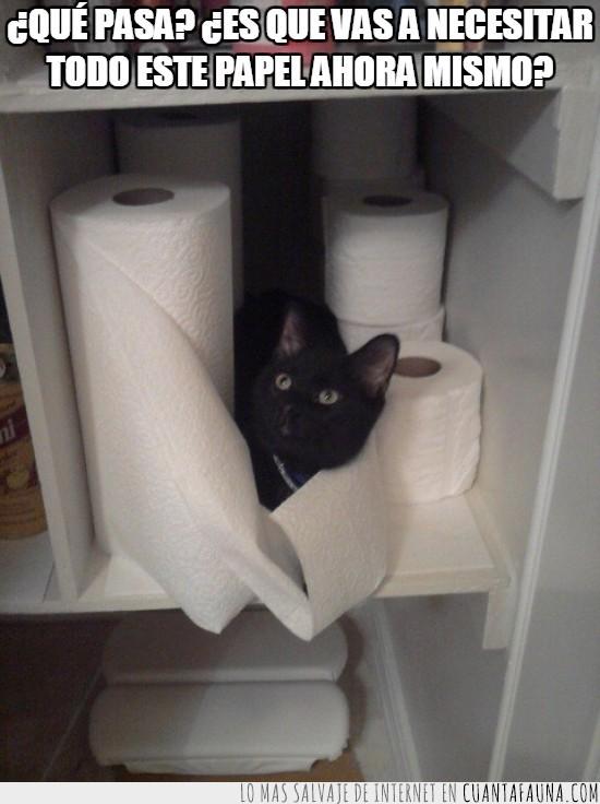 escondido,papel higienico,servilletas,siempre en el mismo sitio