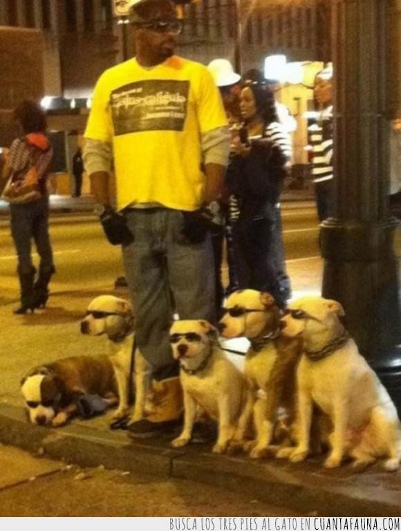 calle,estilo,exceso de suaj,gafas de sol,pasear,perro