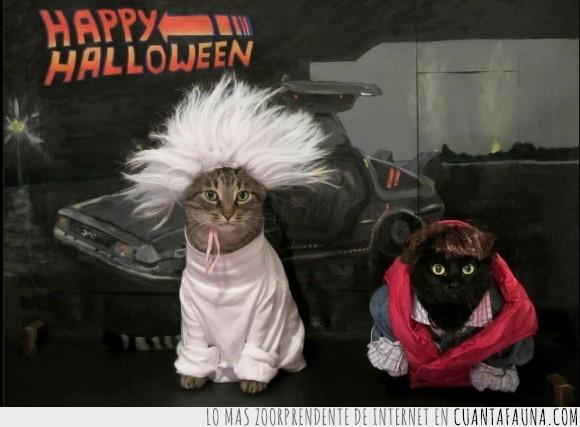 back to the future,doc,emmett brown,gato,halloween,happy,marty mcfly,regreso al futuro