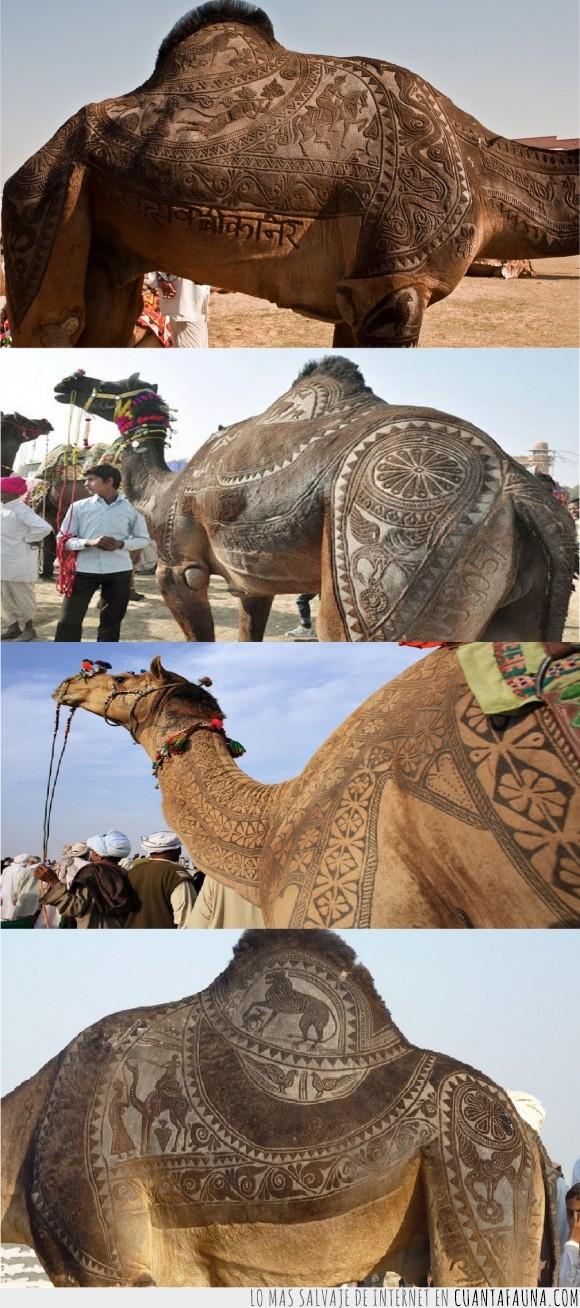 camello,desierto,dromedario,moda,pelo,tapete persa,tatuajes