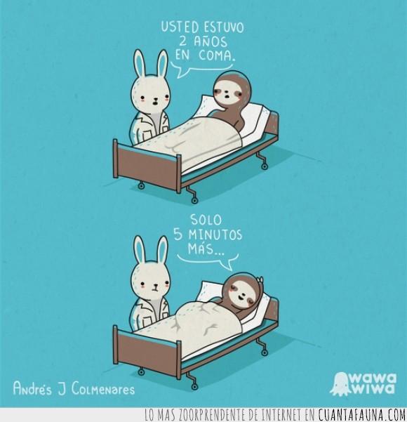 años,coma,conejo,dormir,hay que admitir que el perezoso tiene estilo,pereza,un perezoso tenia que ser