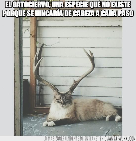 astas,ciervo,cuernos,foto,gatociervo,pose