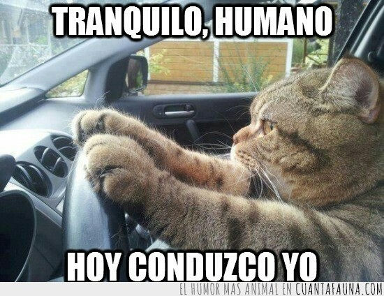 coche,conducir,gato,volante