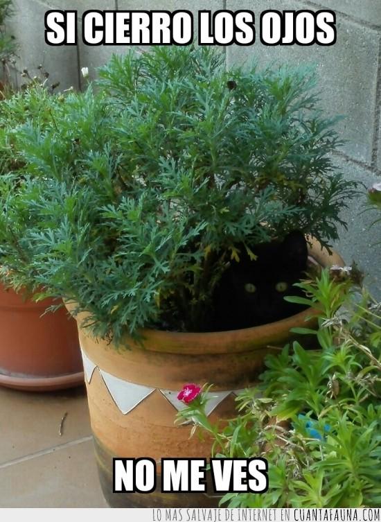 esconderse,gato,me jode las plantas,negro,ninja,ojos