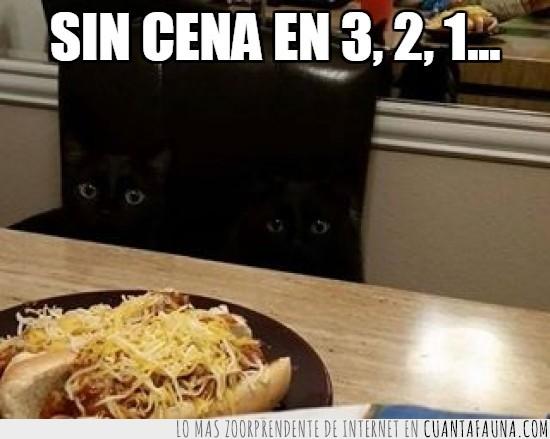 cena,comida,Escondido,espias,negros,ninjas,perritos