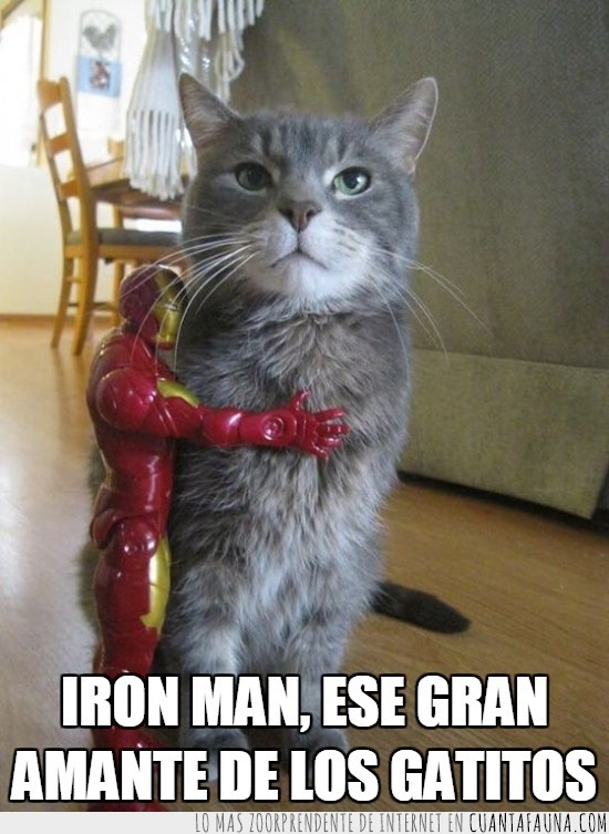 gatitos,gato,iron man,ironman,muñeco,quieto