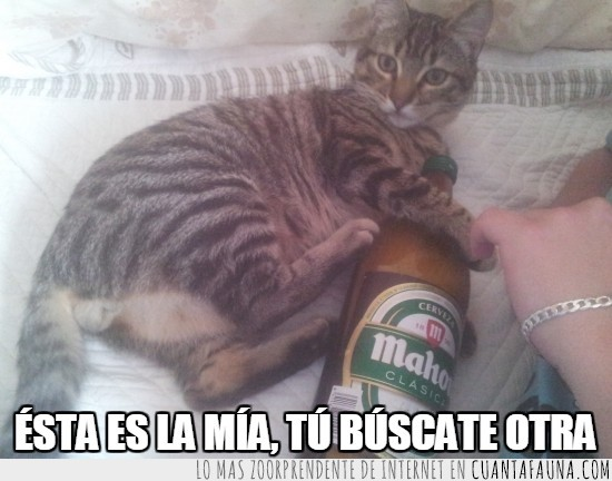 abrazado,botella,buscate otra,cerveza,gato