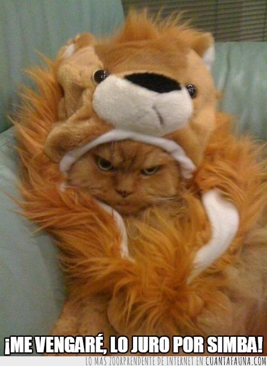 disfraz,Gato,humano,infancia,jurar,león,Simba,venganza
