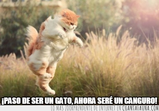 canguro,gato,habitos,saltar