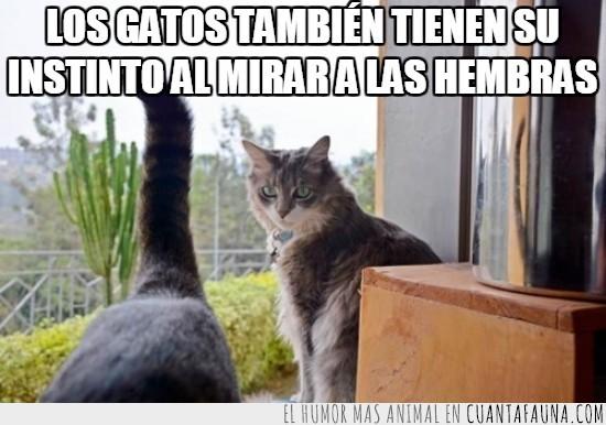 cola,gato,hembras,instinto,mirar