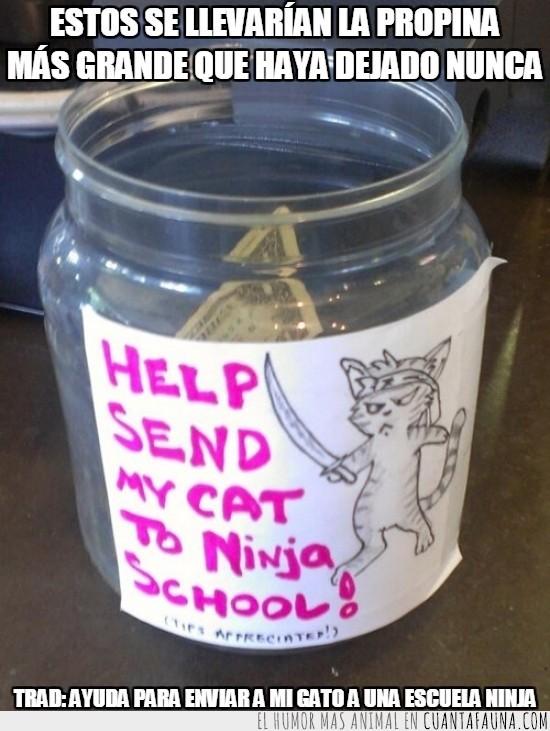 ayuda,bote,enviar,escuela ninja,gato,propinas,tips