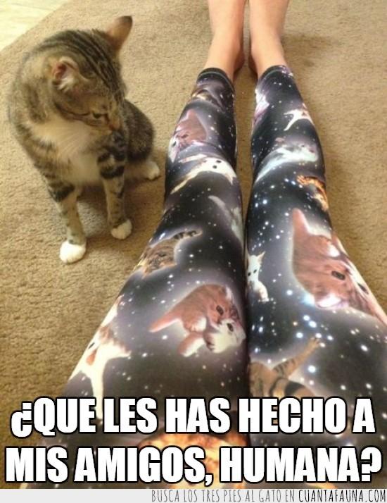 amigos,brujería,gatos,humana,mallas,pantalon