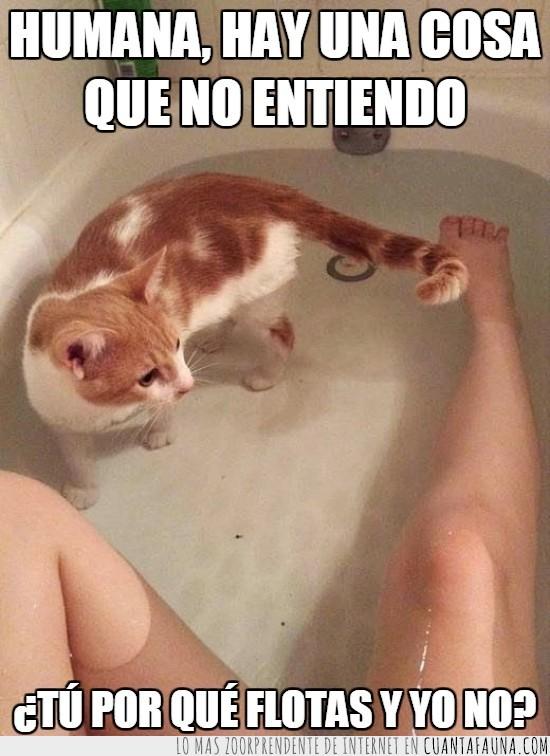 agua,bañar,bañera,flotar,gato,humana