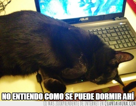 comodo,dormir,encima,es por molestar más que nada,gato,laptop,portatil