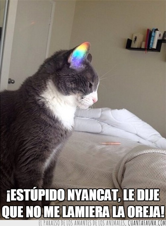 arco iris,arcoiris,colores,gato,luz,nyan cat,oreja