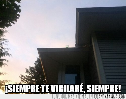 gato campero,techo,tejado,vigilante,vigilar