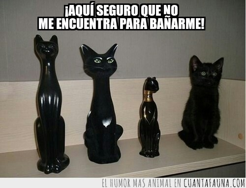 baño,camuflaje,escondido,figuras,gato,negro,ninja