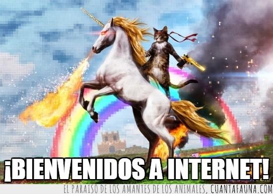 arcoiris,castillo,cuerno,fuego,gato,pistola,unicornio