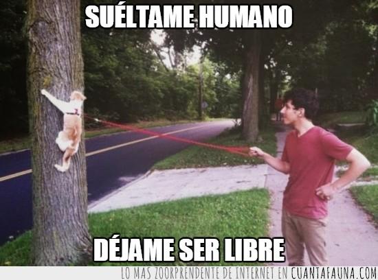 árbol,atado,correa,gato,humano,subir,trepar