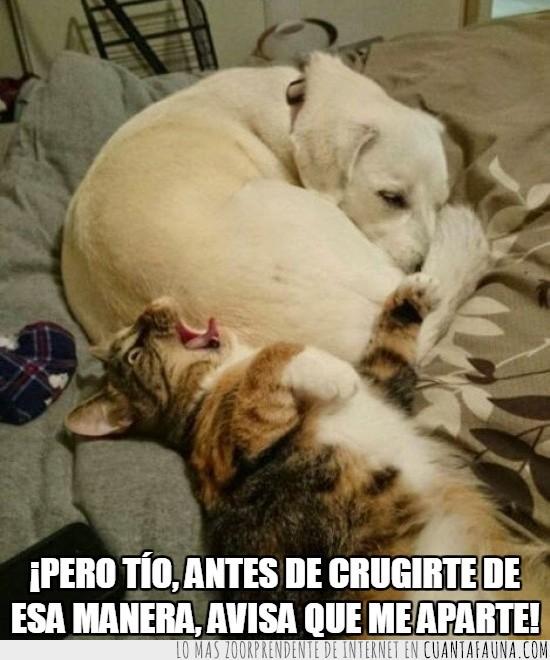 cama,crugirse,dormir,flatulencia,humano,perro