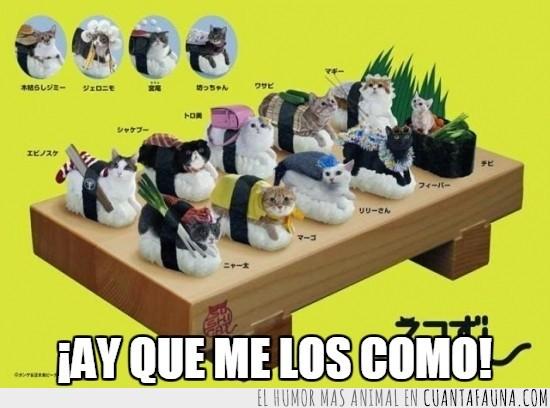 disfraces,gato,humano,pescado,sushi