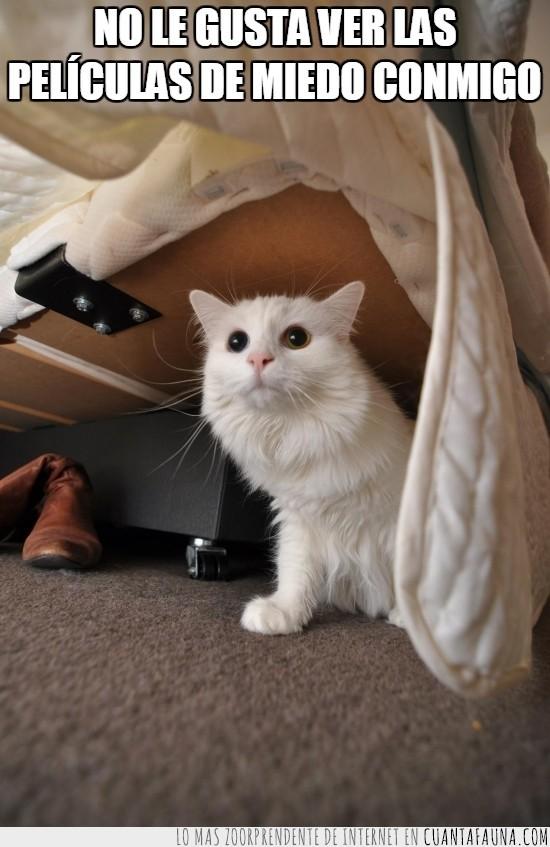 asustado,debajo de la cama,miedo,pelicula,pupilas