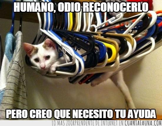 ayudar,colgar,gato,humano,perchas,ropa,tender