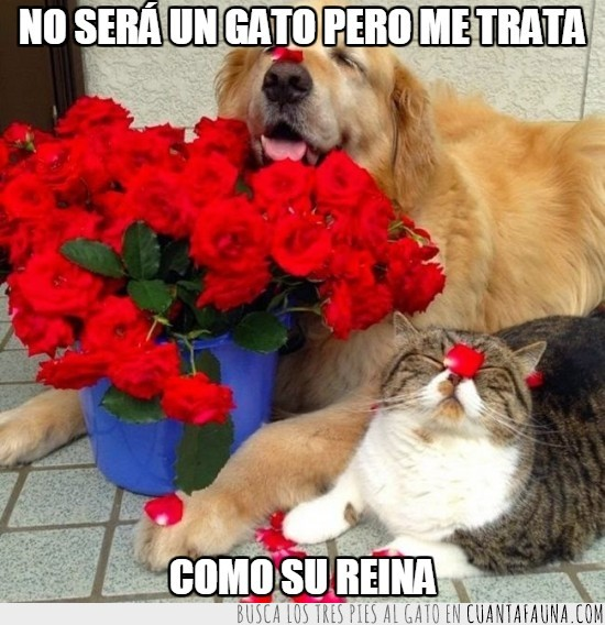 amor,flores,gato,gatuno,humano,perro,petalos
