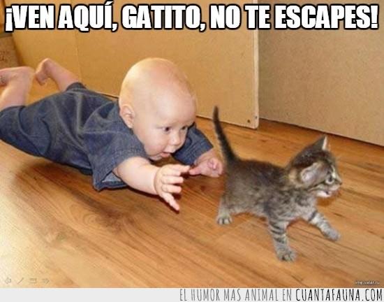 bebe,correr,gatear,gato,persecución trepidante,perseguir