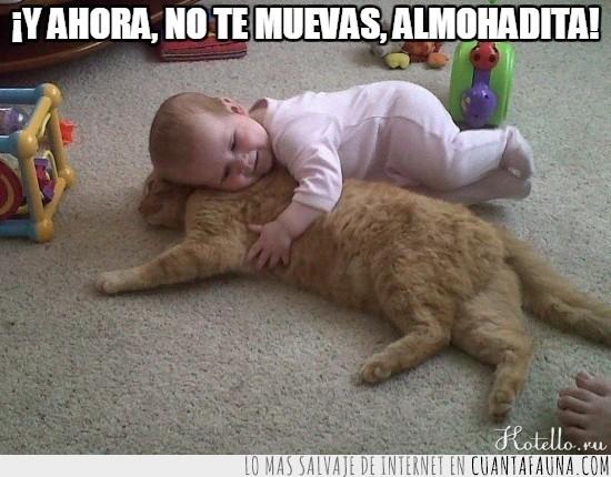 almohada,bebe,gato,tumbado