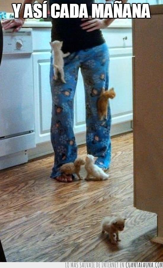 bebitos,escalada,gata,gatos,mama,pequeños